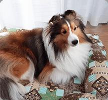 アゴをのせて寝る事が好きな愛犬に購入しました。シェルティですがSサイズでピッタリです。程よい固さもありしっかりした素材で、愛犬も気に入ったようです!
