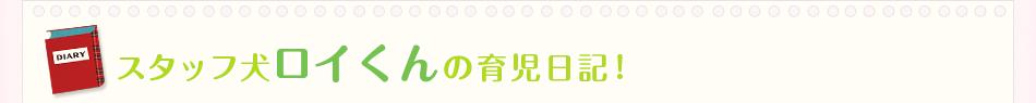 スタッフ犬ロイくんの育児日記!
