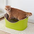 【獣医師監修】猫の起立と歩行~排尿について 【じゃれ猫ルーム】