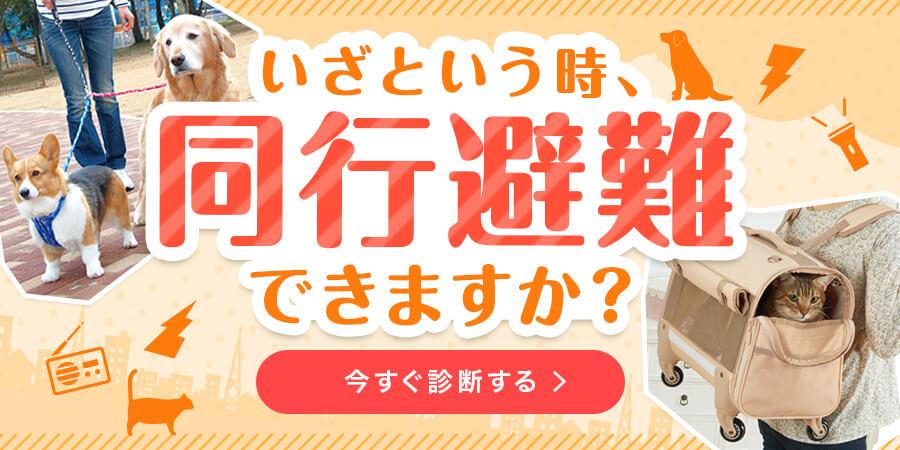 8/3公開防災特集
