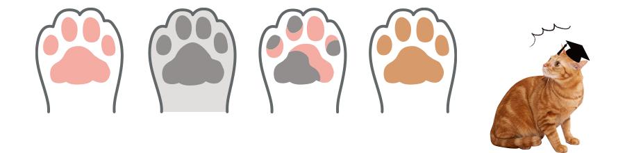 肉球の色は大きくわけて4種類