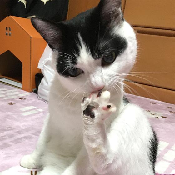 猫が舐めた瞬間の肉球の香りが好き