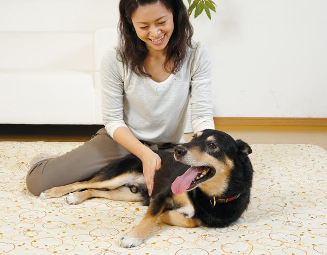 愛犬が安心できる始め方と終わり方