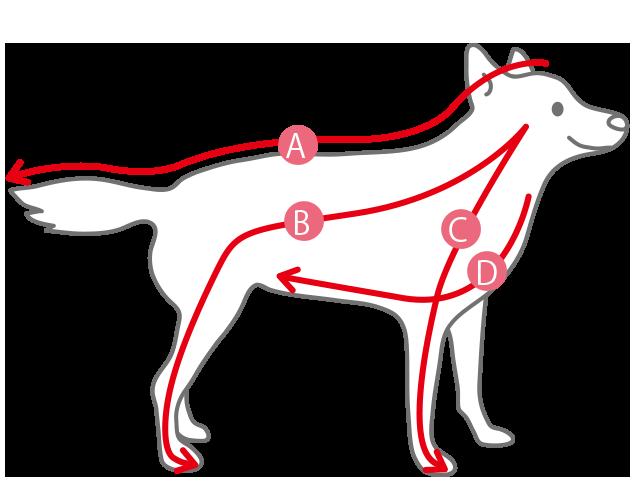 犬のマッサージ基本の4ステップ