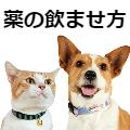【獣医師監修】薬の飲ませ方/目薬のさし方