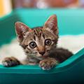 猫のトイレトレーニング注意点!適切な置き場所やおすすめの猫用トイレも